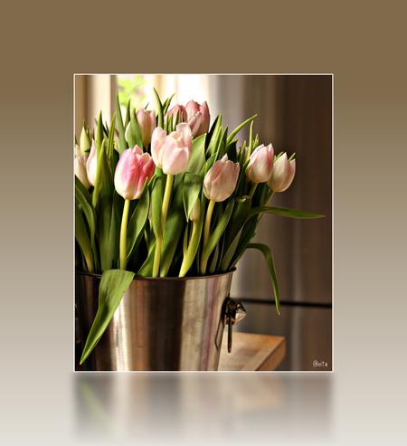 't zonnetje in huis - Gisteren was mijn schoonvader zoals elke zaterdagochtend weer naar de markt geweest en hij nam een grote bos tulpen voor me mee. Laten dat nou mijn f - foto door anitavd op 29-01-2012 - deze foto bevat: tulpen, bloemen