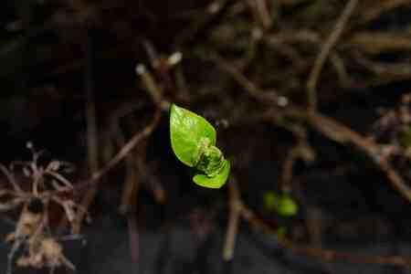 voorjaar - voorjaar - foto door fgkayim op 24-02-2014 - deze foto bevat: voorjaar