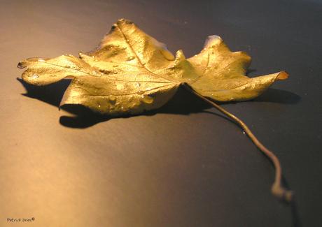 Herfst-blad met dauw