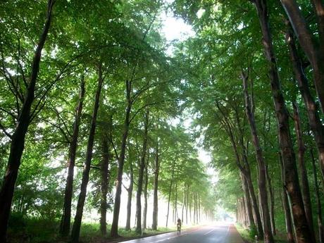 Fietsen in Gelderland