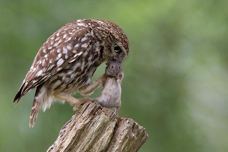 Sssttt, ik ga je niet opeten hoor... beloofd :-)
