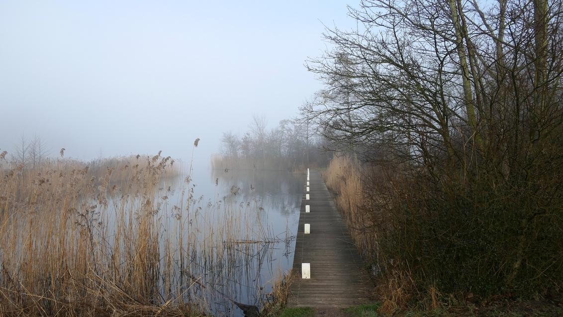 Haarlemmermeerse Bos - Bij de Grote Plas in het Haarlemmermeerse Bos. - foto door melanie.mensink op 04-03-2021 - deze foto bevat: water, natuur, herfst, landschap, mist