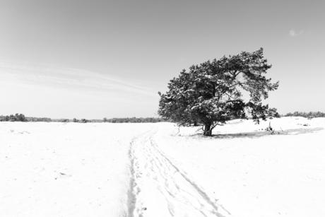 sneeuw vlakte