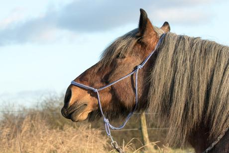 Genietend paarden portretje