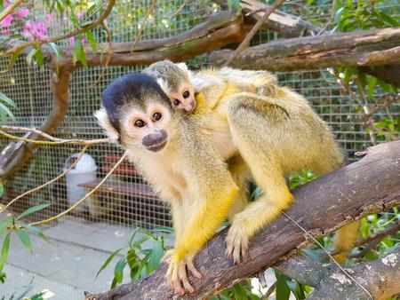 Samen bij mama - Veilig bij mama op haar rus - foto door schaiky op 28-02-2021 - deze foto bevat: dierentuin, dieren, afrika, wildlife, jong