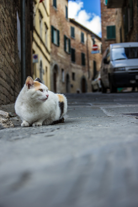 Toscaanse poes