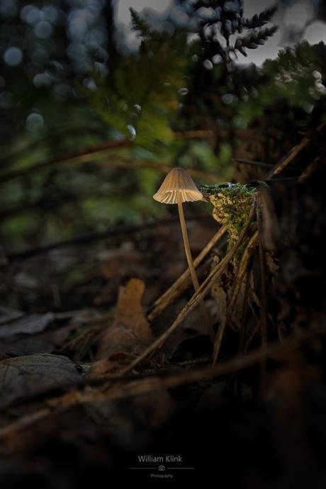 Lighting mushroom