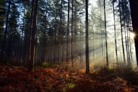 Zonneharpen in het sprielderbos