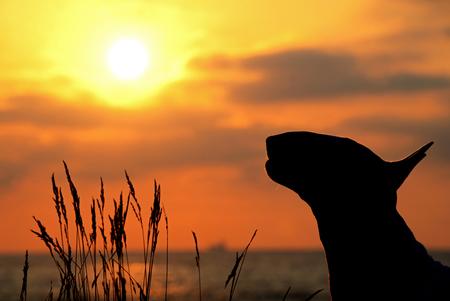 The more I know humans ... - ... The more I love animals - foto door info-2708 op 22-03-2016 - deze foto bevat: dieren, huisdier, hond