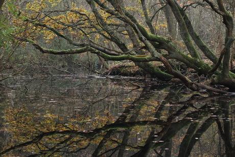 Herfst in Den Helder