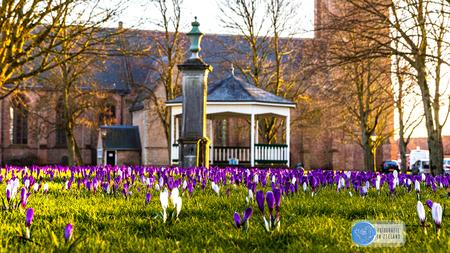 Krokussen - - - foto door KDW-Fotografie op 27-02-2021 - deze foto bevat: groen, zon, bloem, lente, natuur, licht, zonsondergang, tegenlicht, voorjaar, nederland