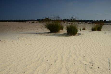 Landschap de Brabantse Sahara