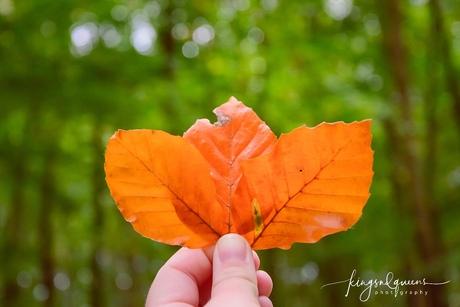 Zomerse Herfst