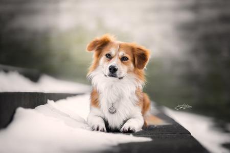 Pablo in de stad - - - foto door danielleluksen op 25-02-2021 - deze foto bevat: groen, trap, wit, oranje, sneeuw, winter, dieren, hond, honden, kerk, dier, stad, koud, urban, grijs, hondje, fotografie, stedelijk, harig, pablo, penning, puppyogen
