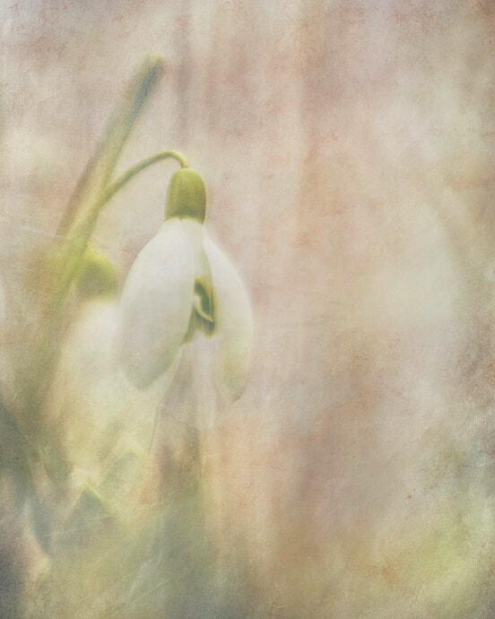 Sneeuwklokje - Iedereen bedankt voor alle reacties op mijn vorige upload. Hier een textuur toegevoegd voor de sfeer. Mvg.remco - foto door loeffen_zoom op 16-02-2020 - deze foto bevat: bloem, natuur, bewerking, textuur