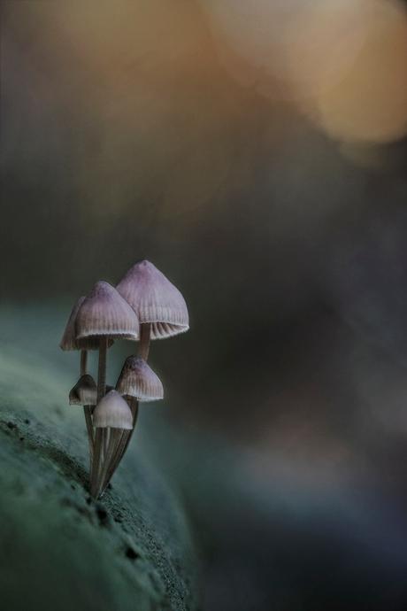 """""""Autumn Fairy Tale"""""""