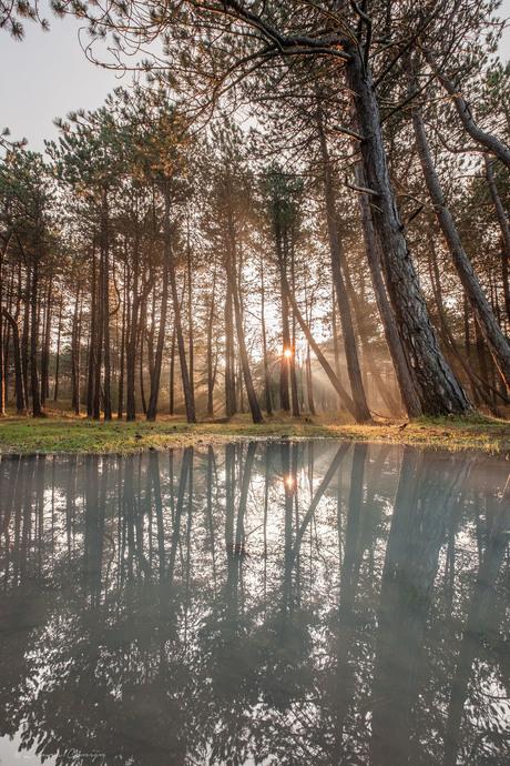 Prachtige ochtend in het bos