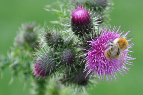 van de bloemetjes en de bijtjes