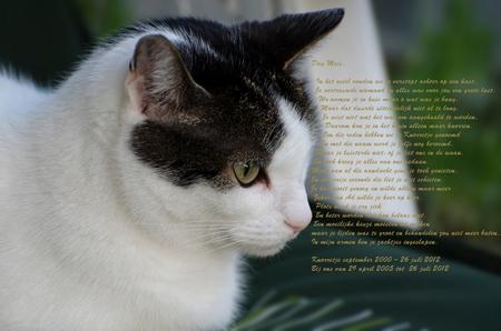 Knorretje - Knorretje ons meisje. Dit is één van de laatste foto's die ik van haar heb gemaakt. 16 juli merkten dat je wat sloom was, maar ja dat zijn we allemaa - foto door Bijntje op 13-09-2012 - deze foto bevat: poes, huisdier, kat, knorretje