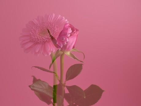Pink Beauties