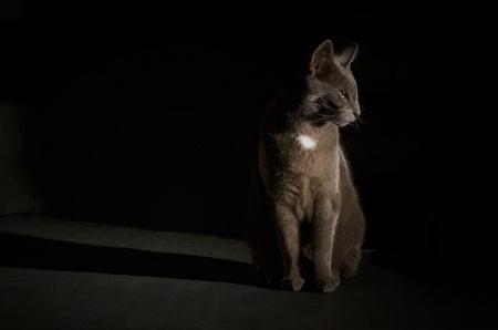 Gijs - Portretje van Gijs. Gelukkig vond hij het goed. - foto door suus72 op 30-09-2012 - deze foto bevat: donker, wit, licht, poes, zwart, huisdier, flits, kat, kater, grijs, pootjes, flitser, strobist, low-key, Blauwe Rus