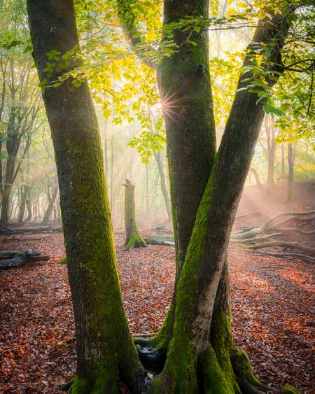 De drie musketiers - Wat een spectaculaire ochtend was dit! Vroeg uit bed en om 5 uur in het Speulderbos om de eerste zonnestralen te vangen. Door de hoge luchtvochtighei - foto door MarijnAlons op 10-04-2021 - locatie: 3852 Ermelo, Nederland - deze foto bevat: bos, zonneharpen, zonsonopkomst, bomen, sunstar, zomer, nevel, mist, landschap, hdr, fabriek, mensen in de natuur, blad, natuurlijk landschap, hout, plantkunde, kofferbak, boom, takje, terrestrische plant