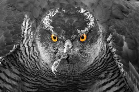 Haviksogen..... - Indringende blik van een Havik. - foto door LeenEuser op 14-04-2021 - deze foto bevat: vogel, oog, uil, bek, fabriek, organisme, kerkuil, grijs, boom, terrestrische dieren