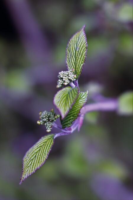 Bloeiende struik - Paars randje - foto door MarideKort op 13-04-2021 - deze foto bevat: fabriek, bloem, bloemblaadje, purper, terrestrische plant, takje, kunst, eenjarige plant, insect, detailopname