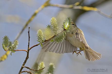 Vliegensvlug eten