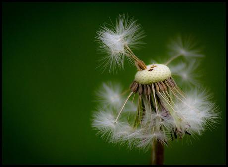 van bloem tot pluis..........................