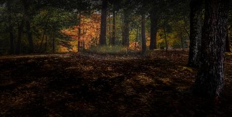 America woodland