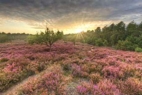 Zonsondergang op Landgoed Groenouwe