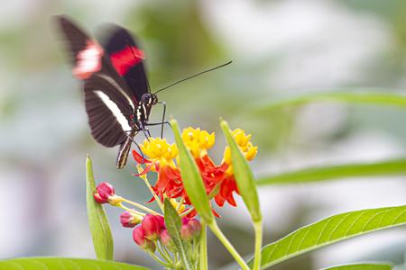 vlinder - vlinder in burgers zoo Arnhem - foto door pcousijn op 10-04-2021 - deze foto bevat: bloem, fabriek, bestuiver, vlinder, insect, geleedpotigen, blad, natuurlijke omgeving, bloemblaadje, motten en vlinders