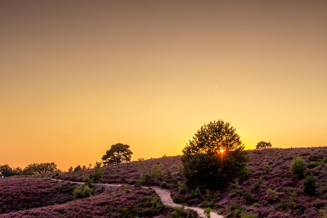 Paars - - - foto door burrybrink op 12-12-2019 - deze foto bevat: lucht, zon, natuur, licht, avond, zonsondergang, landschap, heide, tegenlicht, bomen