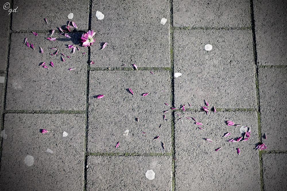 Straat bloem - Is dit nu echte straatfotografie?? - foto door GertjanD op 01-01-2016 - deze foto bevat: straat, bloem