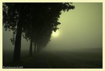 Verloop in de mist 3 - nog een foto uit de wel zeer mistige wandeling door het buitengebied van Giesbeek - foto door a.veerman1 op 28-10-2010 - deze foto bevat: natuur, landschap, mist, zonopkomst, beve, bert veerman