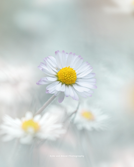 Dreamy little flower