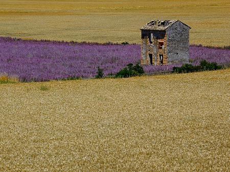 zomer in de Provence - - - foto door wood66 op 28-03-2017 - deze foto bevat: graan, frankrijk, landschap, zomer, lavendel, provence