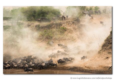 Migration Dust