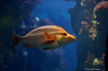 Vis van burgers zoo