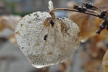 Flinterdun overblijfsel winter