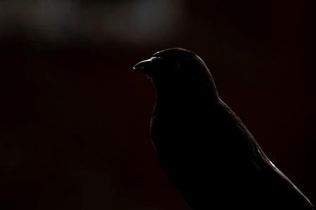 Contouren - Het licht viel mooi op zijn rug en snavel. Heb in de nabewerking dat wat ik in zag terug te halen. Ben benieuwd naar jullie mening.   Iedereen beda - foto door Dodsi op 23-02-2021 - deze foto bevat: natuur, dieren, vogel, kraai