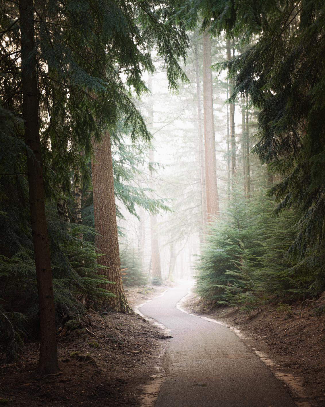 P A T H - - - foto door Hendrik1986 op 02-02-2021 - deze foto bevat: wolken, zon, natuur, licht, winter, landschap, bos, pad, bomen