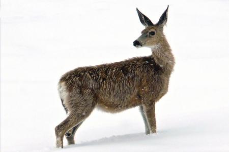 Geen winters plaatje - Het lijkt een winters plaatje maar is het niet. De foto is genomen in juni in de Bighorn Mountains in Wyoming. We begonnen de scenic route met regen, - foto door H. Snijders op 19-11-2009 - deze foto bevat: sneeuw, mountains, bighorn