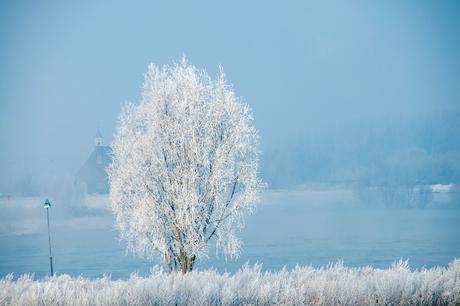 TPF_0341-winter2012