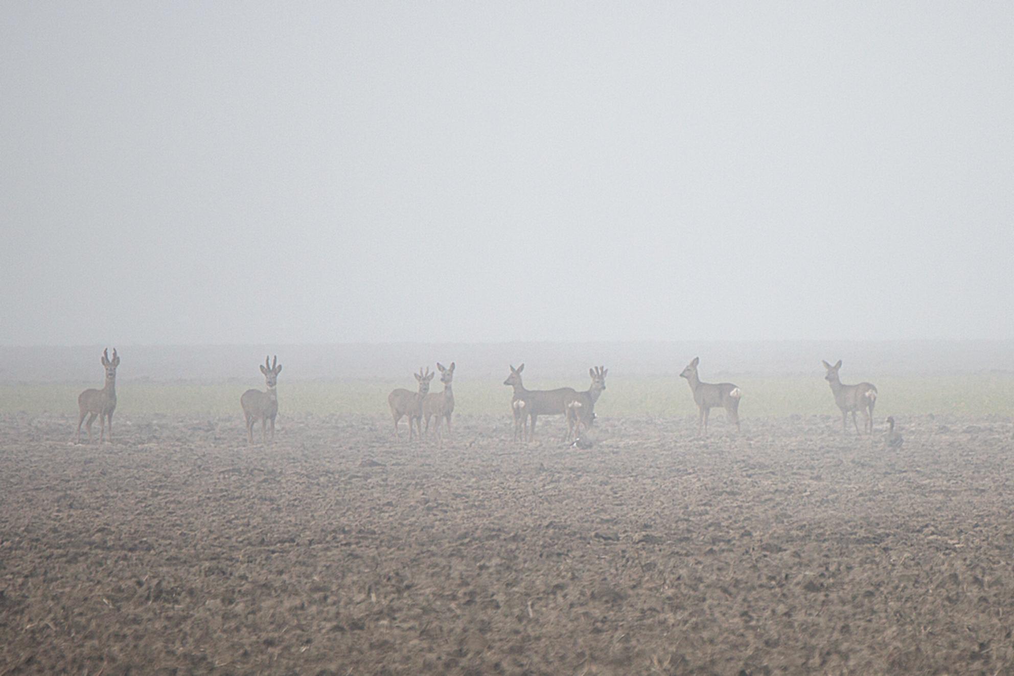 Dichte mist. - - - foto door annaseb op 28-02-2021 - deze foto bevat: winter, dieren, mist - Deze foto mag gebruikt worden in een Zoom.nl publicatie