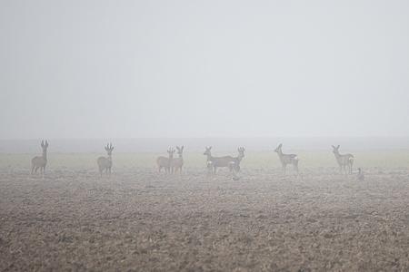 Dichte mist. - - - foto door annaseb op 28-02-2021 - deze foto bevat: winter, dieren, mist