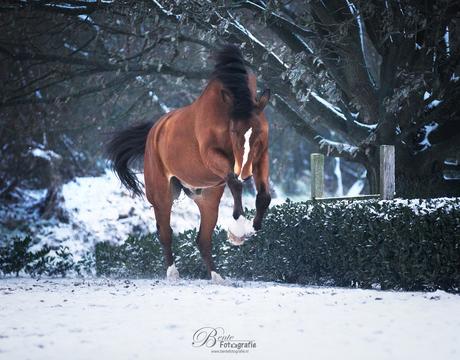 Tyson in de sneeuw