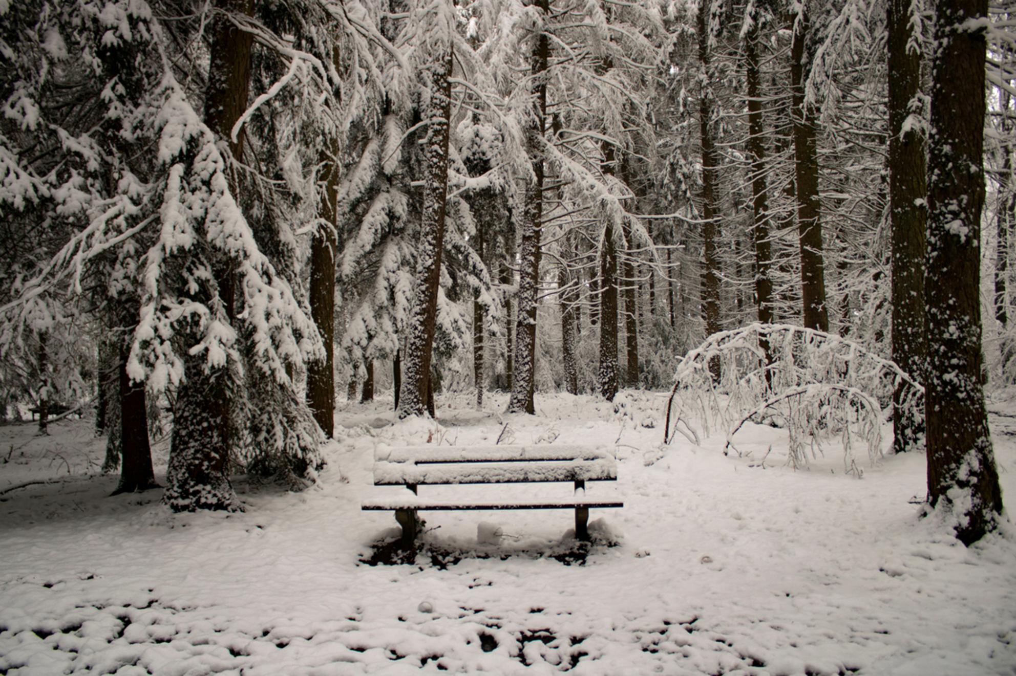 Genieten van de Winter - Hoe magisch mooi de natuur kan zijn.. Vijlenerbos, Vijlen, Zuid-Limburg. 25 Januari 2021. - foto door Carla34 op 30-01-2021 - deze foto bevat: boom, natuur, ochtend, sneeuw, winter, landschap, bos, nederland, bankje, vijlen, vijlenerbos, zuid-limburg