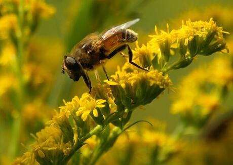 Honing zoeken